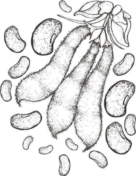 Ilustrácia Mucuny